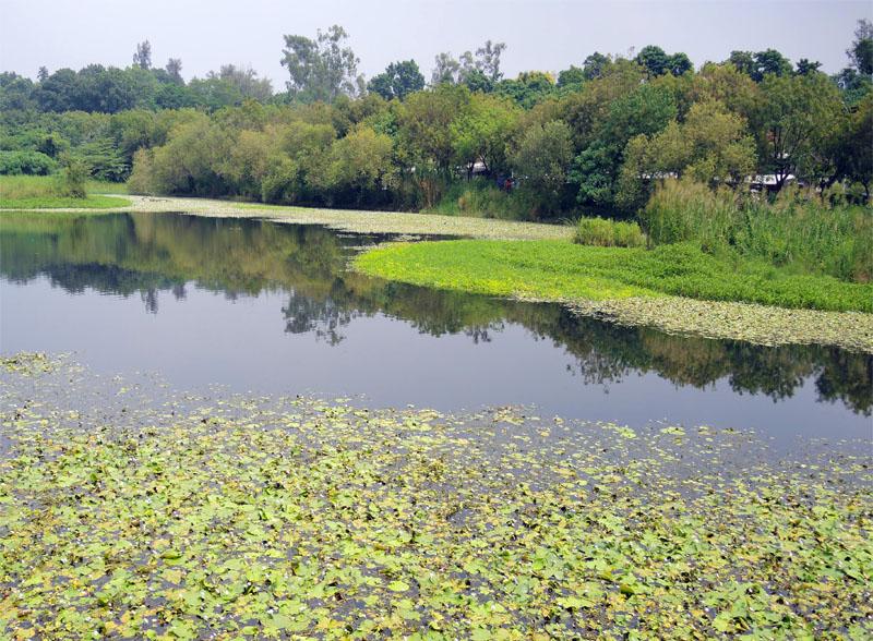 鳥松是假日遊湖賞生態的好去處。(圖∕徐世雄 攝)