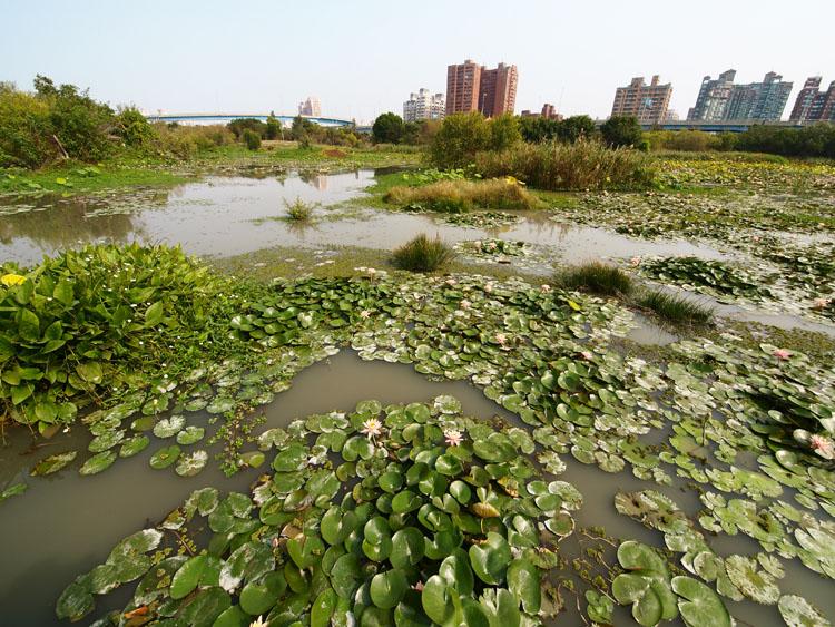 高雄市打造水綠空間成為城市之肺及市民的休閒去處。(圖∕張簡英豪 攝)