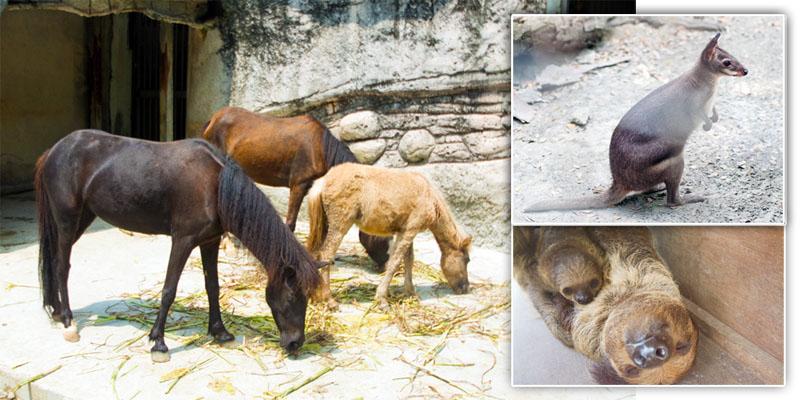 壽山動物園新生兒報到,可愛動物寶寶吸引遊客目光。(圖∕李士豪 攝)