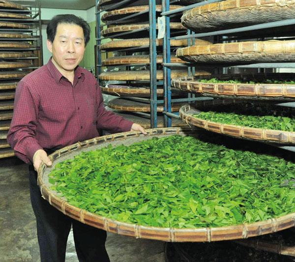 第一次發酵去除茶青的水份 During the first round, the tea leaves lose excess moisture.