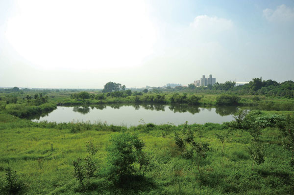舊鐵橋南面是廣達120公頃的濕地公園 The view south takes in the 120-hectare wetland park.