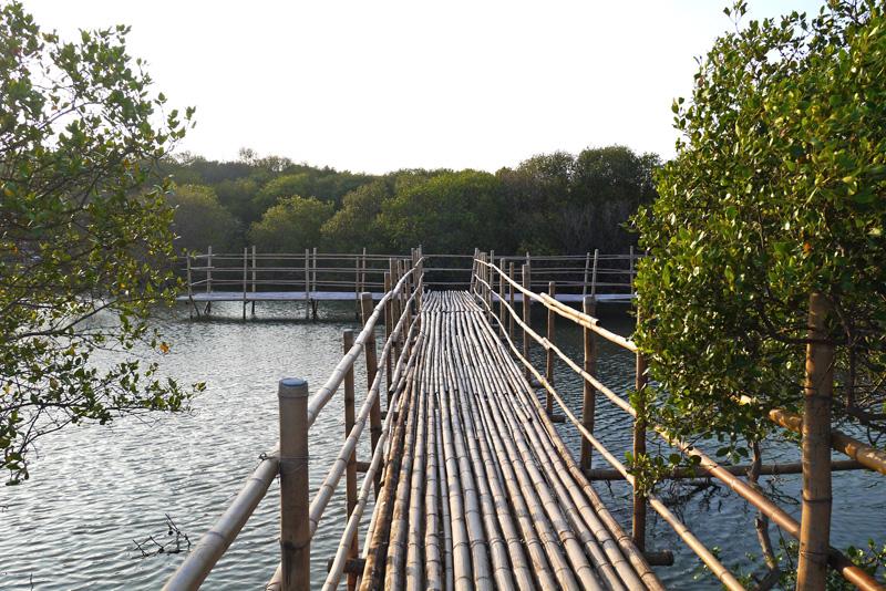 濕地生態物種豐富,整建後的林園區公12海洋濕地公園有助提升觀光發展。(圖∕李昀諭 攝)