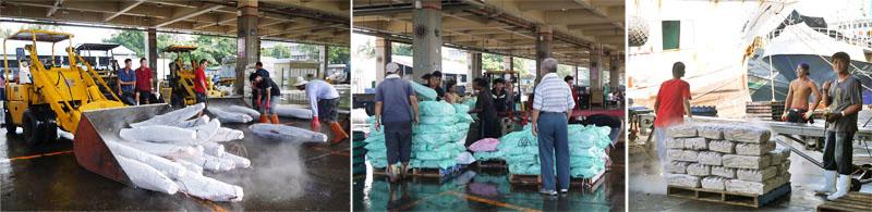 前鎮漁港魚市場交易量全國第一,遠洋漁業為前鎮漁港每年帶來320億元以上的產值。(圖∕李昀諭 攝)