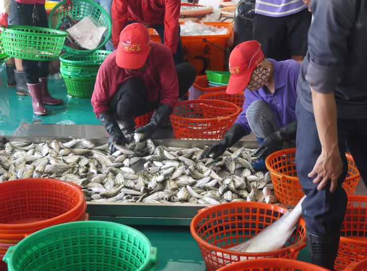 新開幕的梓官魚市場大樓,魚貨從搬運、清洗、拍賣,全程不落地。(圖∕李昀諭 攝)