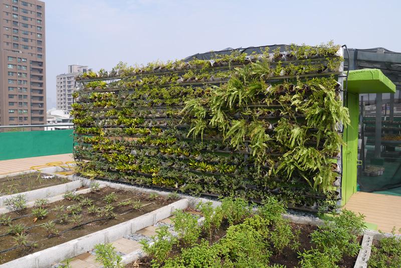 音悅農園溫室前的植栽生態牆茂密繁盛。(圖∕李昀諭 攝)