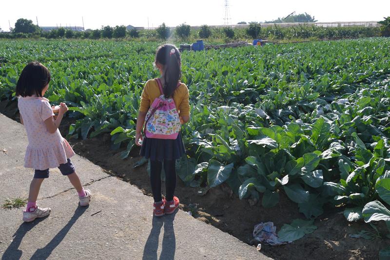 路竹區農產眾多,花椰菜出口量更是全高雄之冠。(圖∕李昀諭 攝)