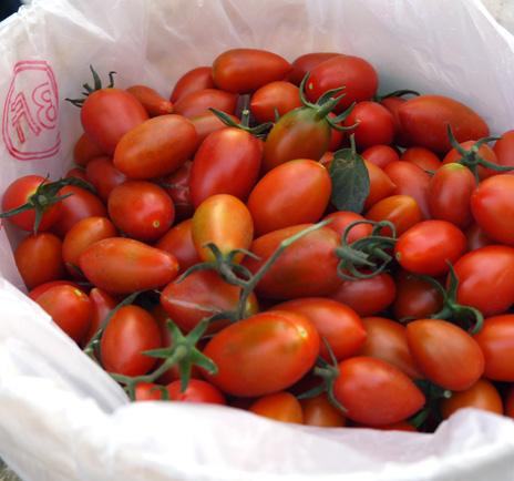 路竹區是嘉南平原以南最大的番茄產地,番茄品質優良,鮮甜多汁。(圖∕李昀諭 攝)
