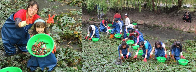 蓮池潭新闢菱角生態池,讓民眾體驗復古採菱樂。(圖∕高雄市政府觀光局 提供)