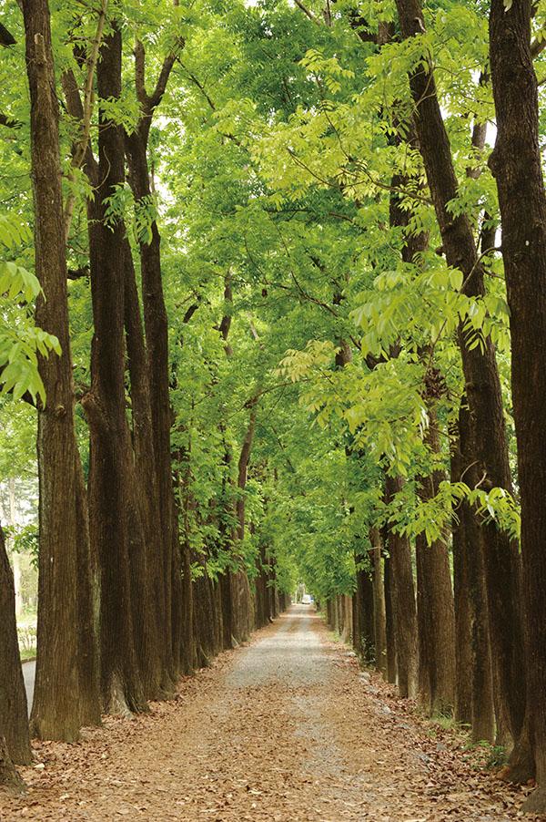 六龜擁有森林與溫泉豐富的觀光資源,利用假期可以洗滌身心。Liouguei District, popular for weekend getaways, hiking and hot springs