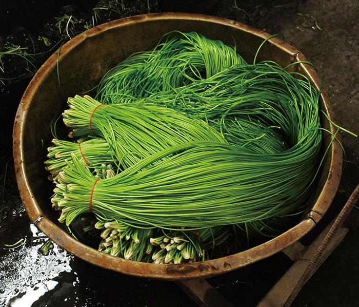 美濃野蓮Wild lotus from Meinong