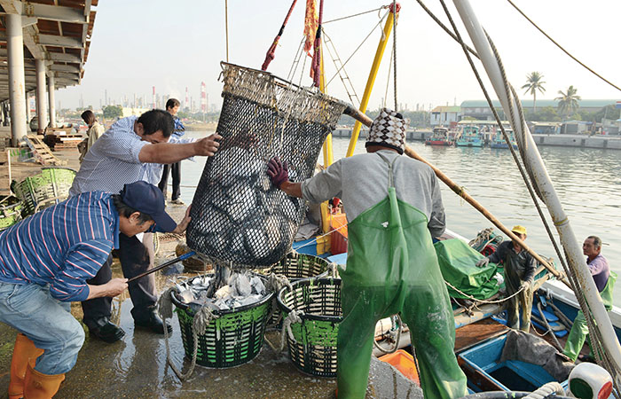 林園魚貨種類豐富 Jhongyu Fishing Port's multitude of fish